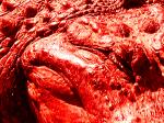 Aculiecinieks aligators kapos