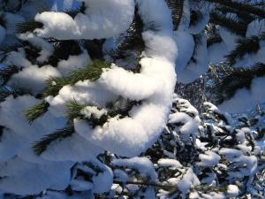 Sniega Lācītis